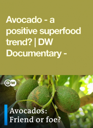 Avocado: A Positive Superfood Trend